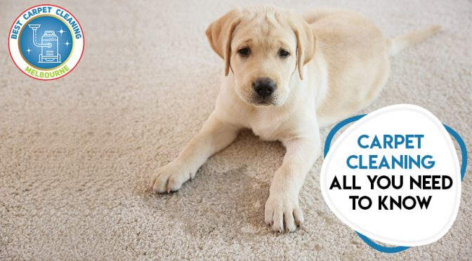 Carpet Cleaning All You Need to Know